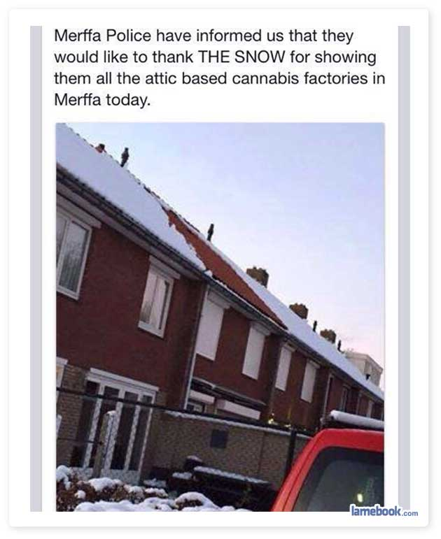 High Five Snow