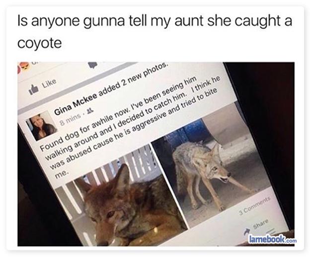Lost Aunt Found