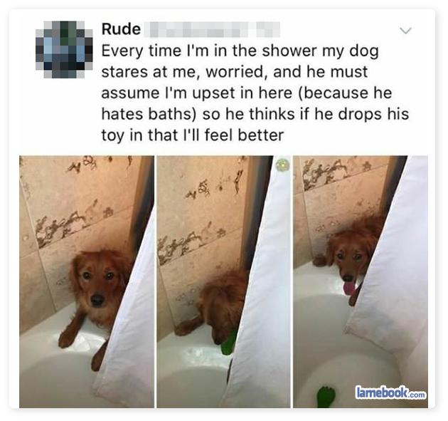 Good Boy Bath